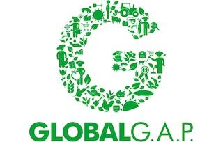 Logo Global GAP certificeringen van Jacobs Champignonkwekerij
